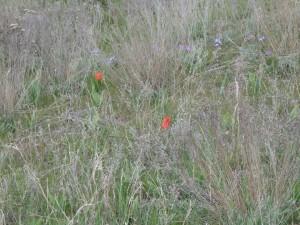 Один из цветников для рассады на одесские склоны.Отчаянные Цветоводы/Відчайдушні Квіткарі