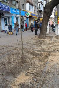 Саженцы в Одессе без ухода гибнут
