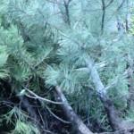 Уничтожение парка Юность в Одессе зятем мэра Черноморска, Алексеем Почиковским (ПАТУРИДИС) – гражданином Беларуси и Греции