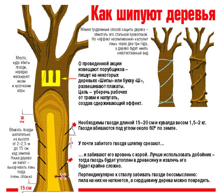 Шипование деревьев