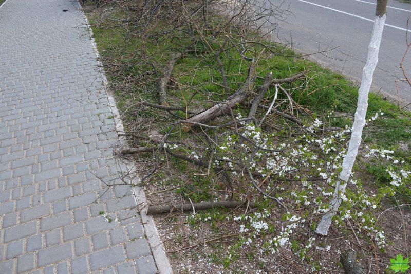 Трасса здоровья,Ланжерон,Одесса