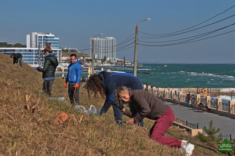 высадка цветов в Одессе