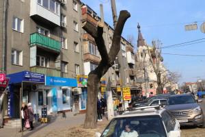 IMG_6634-300x200 Курс одесской мэрии на планомерное уничтожение городских экосистем
