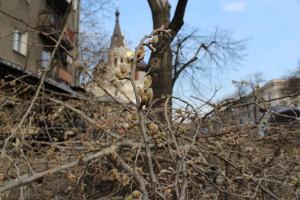 IMG_6638-300x200 Курс одесской мэрии на планомерное уничтожение городских экосистем