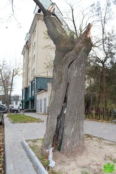 Необходима срочная работа по озеленению Одессы.