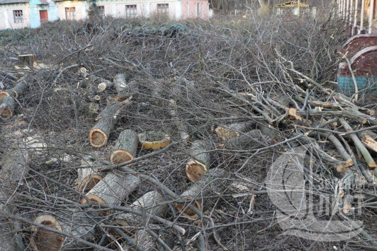 Соратник ЮВТ уничтожил целый парк на побережье Одессы.