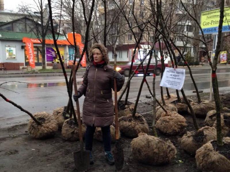 Одесситы смогут бесплатно получить саженцы для благоустройства города