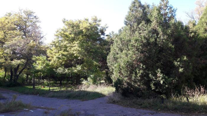 Роман Моргенштерн: «На территории санатория «Красные зори» необходимо создать мемориальный парк» _3