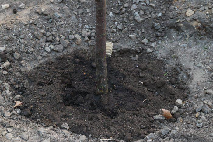 В Приморском районе Одессы поливают деревья соляркой для установки новых МАФов