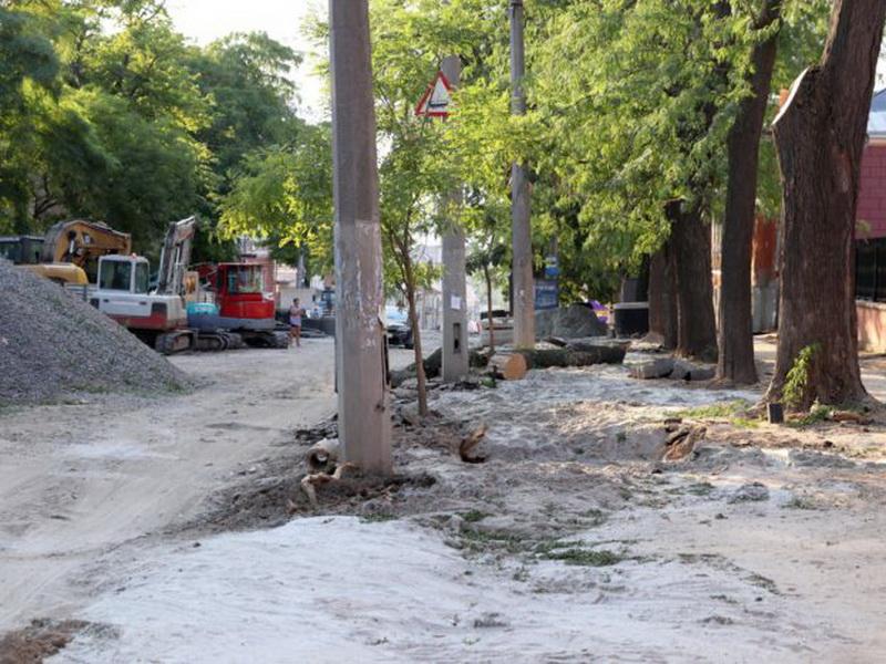 Деревья-исполины на Софиевской необходимо защитить – экоактивисты