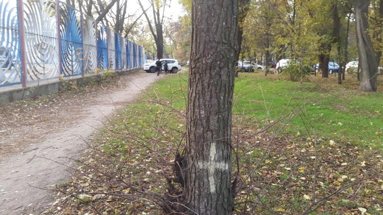 Минус 39 деревьев, плюс 39 машиномест