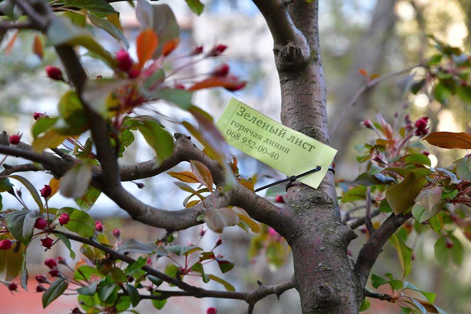 Розквітли яблуні