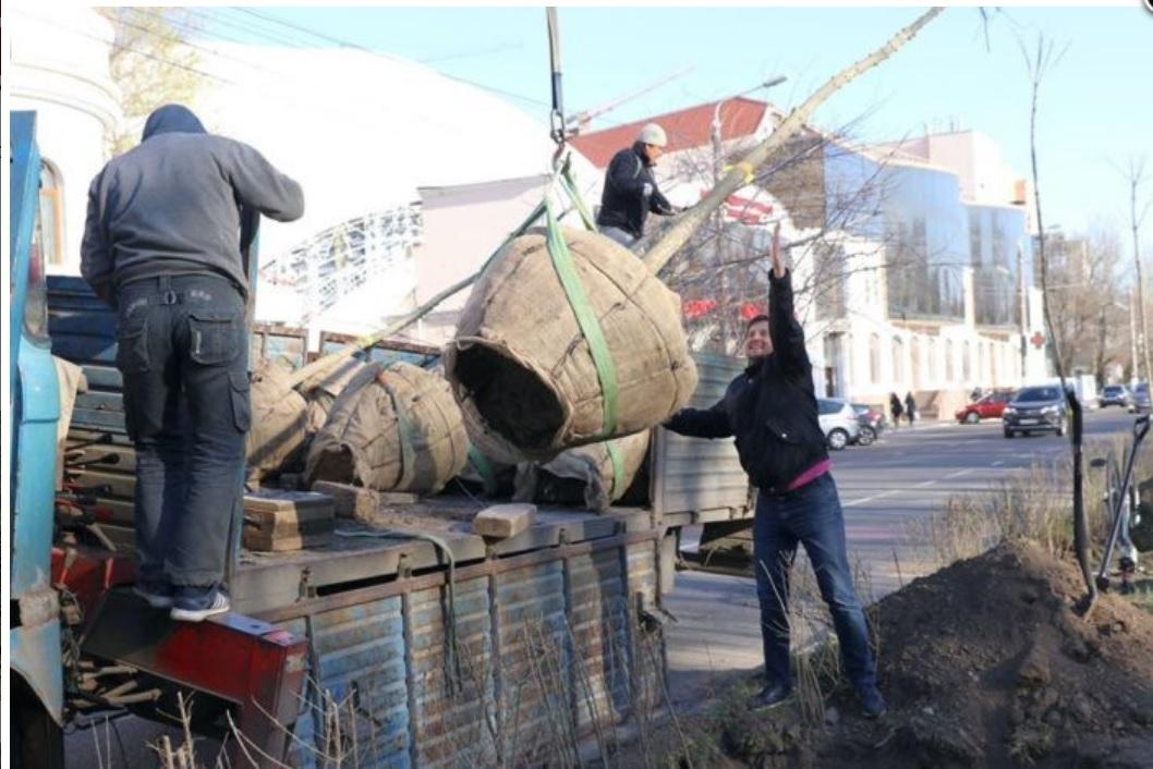 Зеленый тоннель создали на Фонтане одесские коммунальщики вместе с экоактивистами