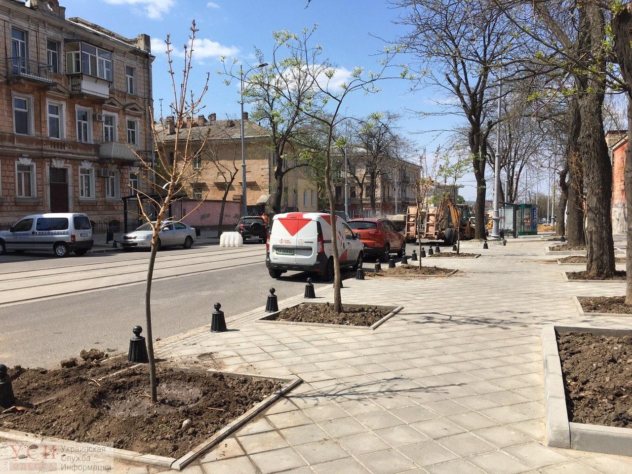 Золотистый ясень и клены: возле Одесского худмузея высаживают деревья