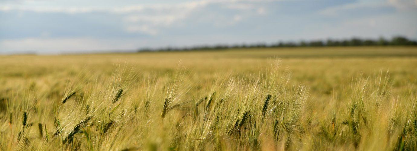 Зеленый лист - настоящая природа Одесского региона_2