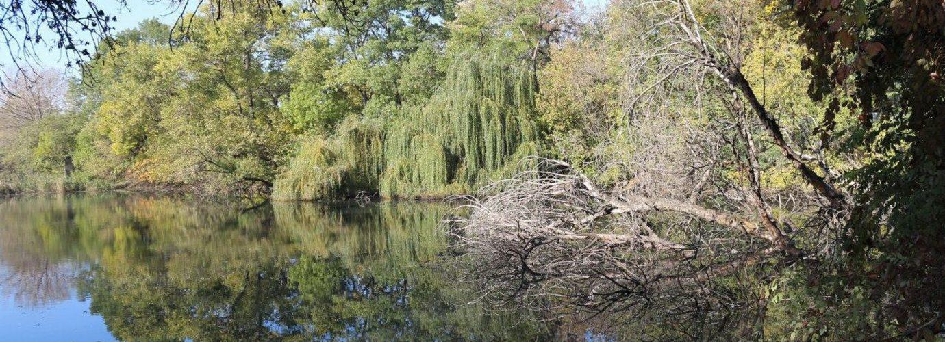 Зеленый лист - настоящая природа Одесского региона_7
